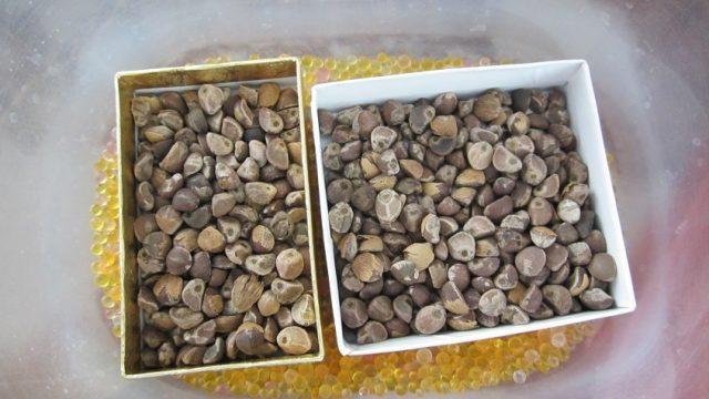 seeds in silica gel