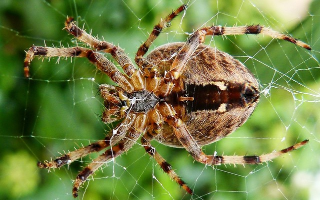 Video the 5 biggest spiders in the world are truly for How to stop spiders coming in your house