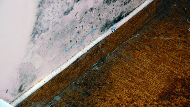 mold-in-an-apartment