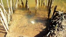 primitive fish trap