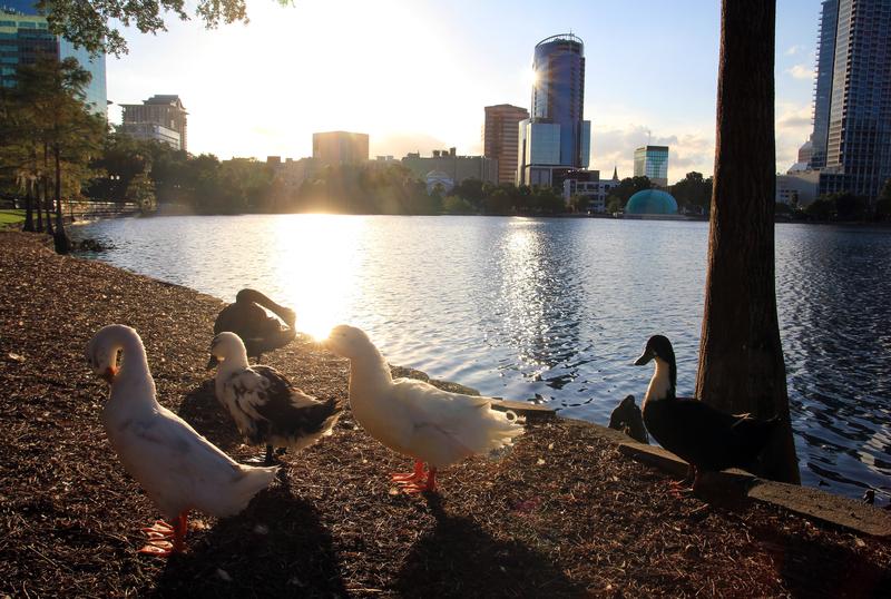 ducks-in-the-city