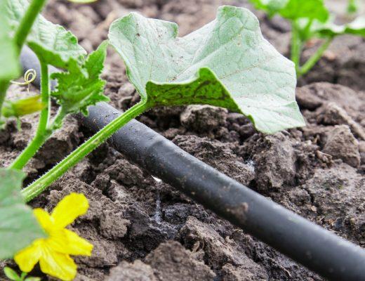 garden and irrigation