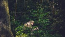 man hiding in forest