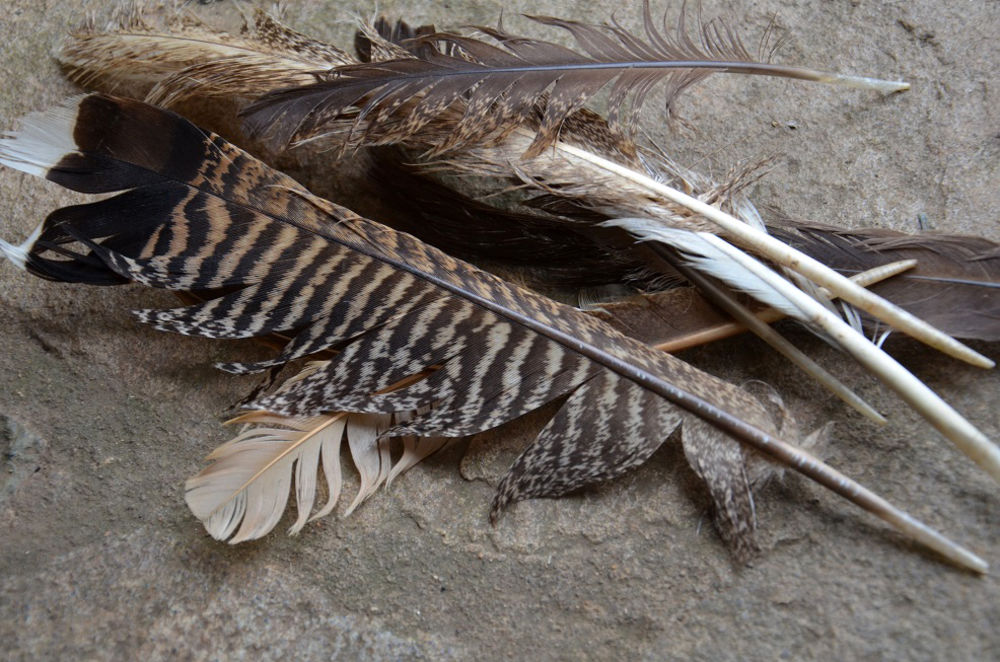 how to cut turkey feathers for arrows