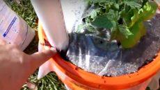 garden in bucket