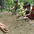 Native Americans farming