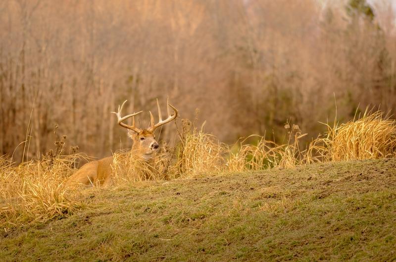 deer during hunting season